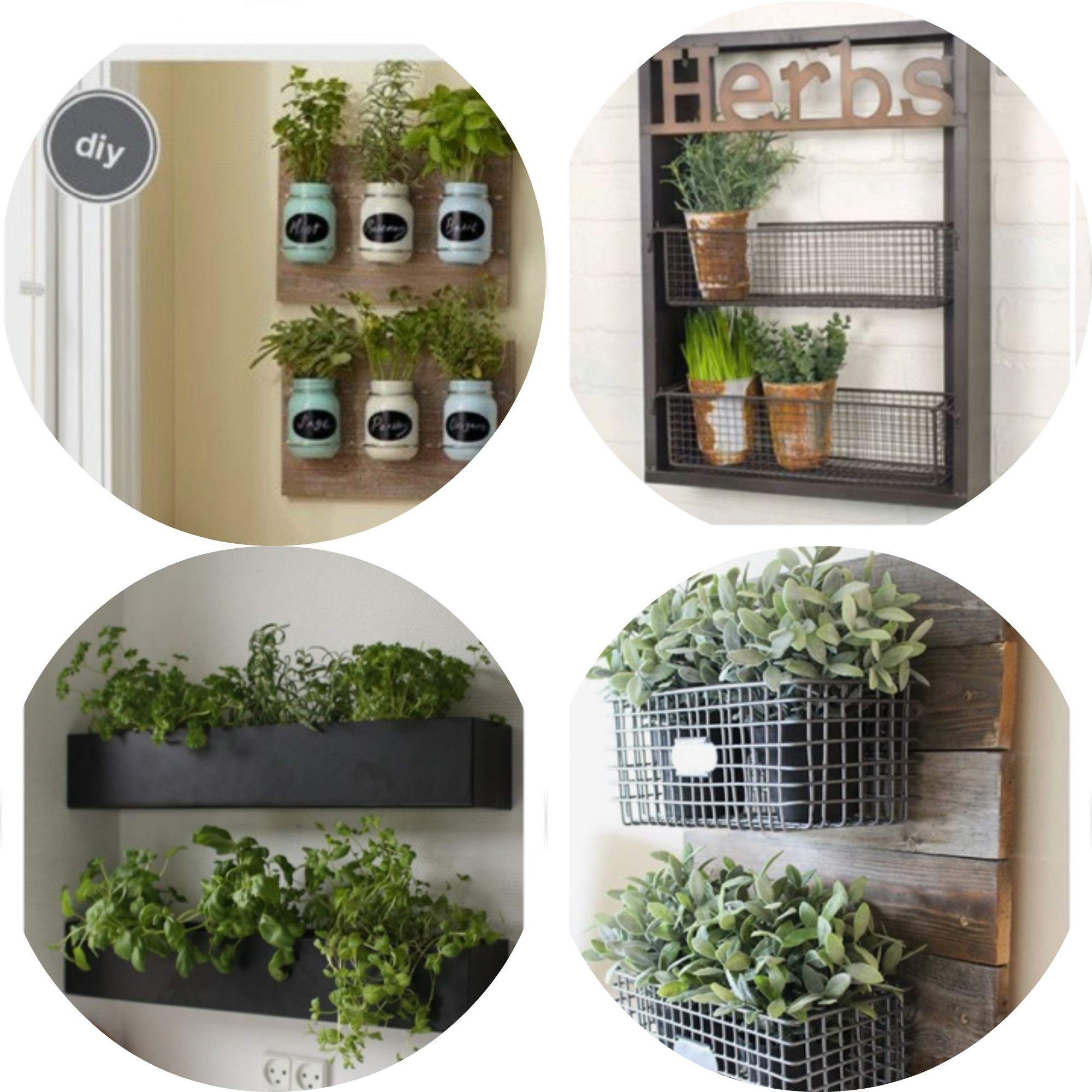 My Favorite Ways To Display Herbs In
